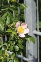 flower_by_chenjung-d7h3ne3.jpg