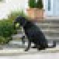 notoyhund